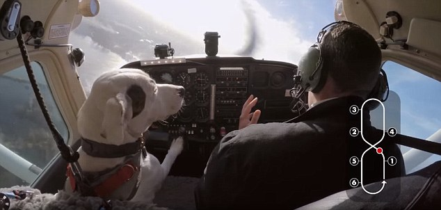 This Is Your Pilot Woofing