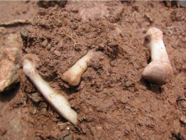 Bones Image 4