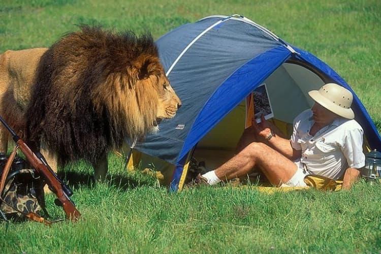 Verifying The Wildlife