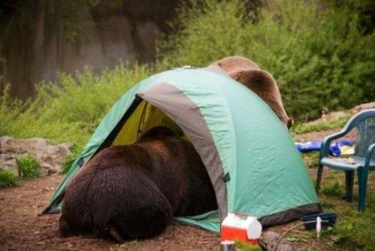 Goldilocks Tent