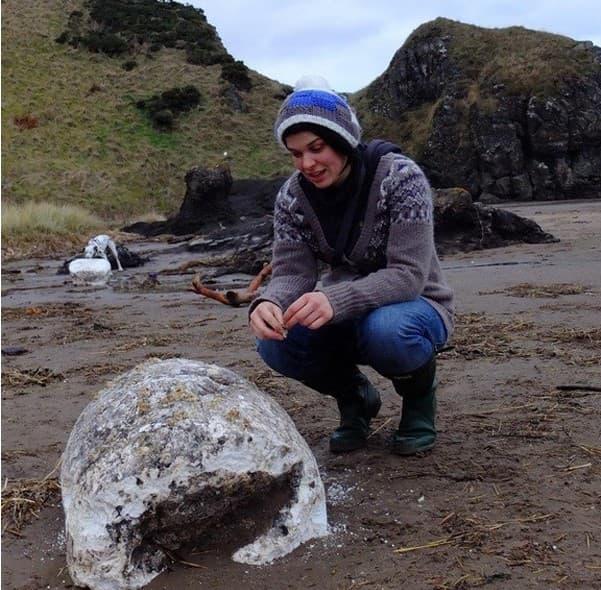 WWII Shipwreck Lard Found On Beach
