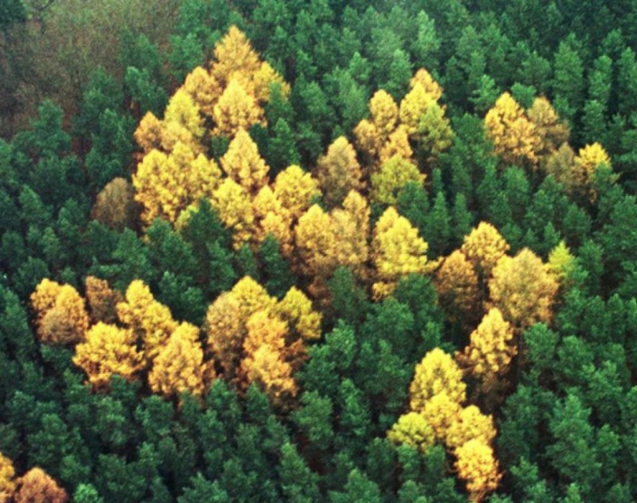 Forest Swastika Discovered In 1992