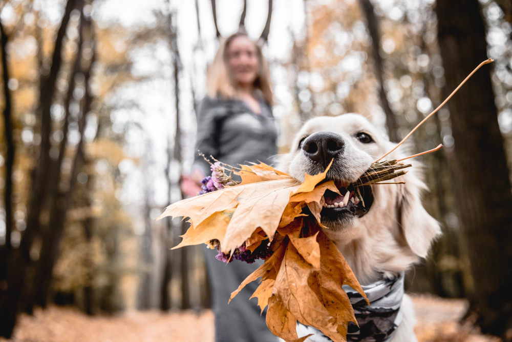 Shutterstock 1168839649